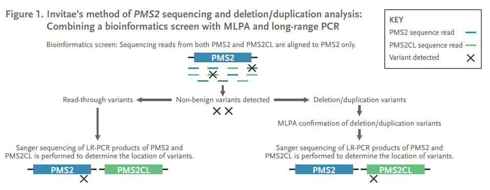 Figure 1. Invitae's method of PMS2 sequencing and deletion/duplication analysis